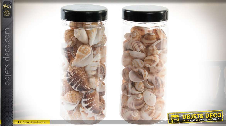 Deux bocaux de coquillages pour décoration : 500 gr de conques
