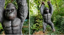 Gorille en résine à suspendre, décoration réaliste avec finitions soignées, 62cm