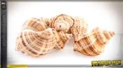 Grands coquillages pour décoration style bord de mer (env. 3,2 kg)