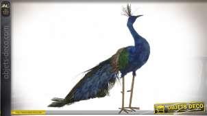 Reproduction animalière aspect réel : grand paon 65 cm